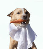 Cane vegetariano Immagini Stock