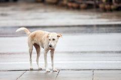 Cane vicino alla via Fotografia Stock
