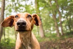 Cane vicino del ritratto Fotografie Stock