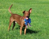 Cane vicino su con un fondo dell'erba Immagine Stock Libera da Diritti