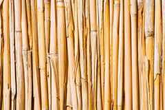 Cane wall. Vertical pipes in natural colors Stock Photography