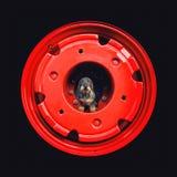 Cane Wirehaired del bassotto tedesco che si siede su un trattore della ruota Immagine Stock