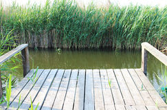 Cane. Wooden bridge and cane in a pond Royalty Free Stock Photo
