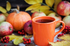 Caneca alaranjada no fundo do outono imagem de stock