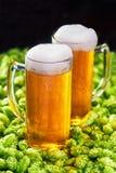Caneca dois de cerveja fria em cones de lúpulos do fundo Foto de Stock