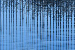 Canes of bamboo reflected in blue water pond Royalty Free Stock Photography