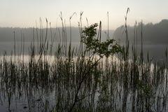Canes. lake Royalty Free Stock Photo