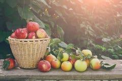 Canestri con il raccolto delle mele nel giardino di caduta Fotografia Stock