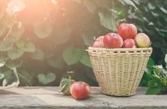 Canestri con il raccolto delle mele nel giardino di caduta Immagine Stock