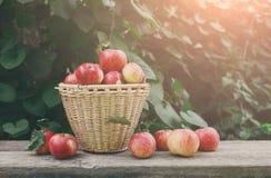 Canestri con il raccolto delle mele nel giardino di caduta Fotografie Stock