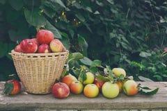 Canestri con il raccolto delle mele nel giardino di caduta Fotografie Stock Libere da Diritti