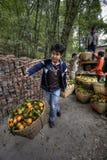 Canestri di trasporto dell'agricoltore con il palo su all'aperto, il Guangxi della spalla, Immagini Stock