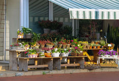 Canestri e vasi con le piante sui banchi di legno immagini stock