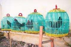 Canestri variopinti del gallo Fotografia Stock Libera da Diritti