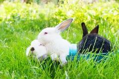 Canestro blu Pasqua di Wattled del coniglio nero bianco Fotografie Stock Libere da Diritti