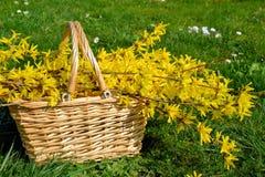Canestro con i fiori gialli Immagine Stock