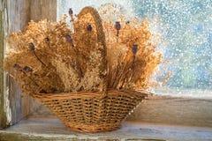 Canestro con i fiori secchi Fotografie Stock Libere da Diritti