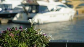 Canestro con i fiori sul recinto video d archivio
