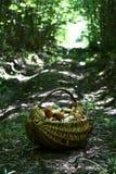 Canestro con i funghi della tremula sulla strada di legno Fotografia Stock Libera da Diritti