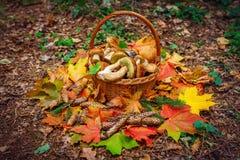 Canestro con i funghi nel raccolto di autunno della foresta di autunno, regali della foresta Fotografia Stock