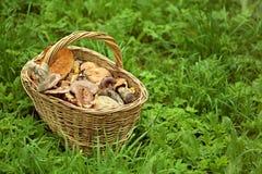 Canestro con i funghi su erba verde Immagini Stock Libere da Diritti