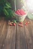 Canestro con i lamponi vicino al cespuglio sulla tavola di legno in giardino Fotografie Stock