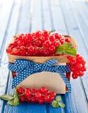 Canestro con il ribes rosso fresco Fotografia Stock