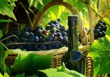 Canestro con l'uva e una bottiglia Immagine Stock