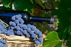 Canestro con l'uva e una bottiglia Fotografia Stock Libera da Diritti
