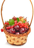 Canestro con la ciliegia, l'uva passa e le uva spina mature fotografia stock