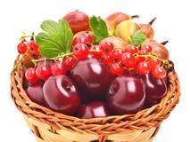 Canestro con la ciliegia, l'uva passa e le uva spina mature fotografie stock libere da diritti