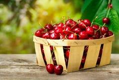 Canestro con le ciliege in frutteto Fotografie Stock