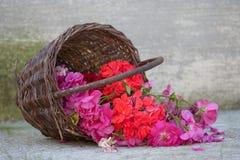Canestro con le fioriture Fotografia Stock Libera da Diritti