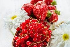Canestro con le fragole mature ed il ribes rosso decorati con le grandi margherite Primo piano Fotografia Stock Libera da Diritti