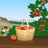 Canestro con le mele rosse e la riflessione Fotografia Stock Libera da Diritti