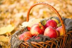 Canestro con le mele sulle foglie di autunno in foresta Immagine Stock Libera da Diritti
