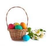 Canestro con le uova di Pasqua ed i fiori isolati immagine stock