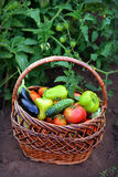 Canestro con le verdure Immagini Stock