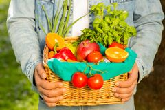 Canestro con le verdure e frutti nelle mani di un fondo dell'agricoltore della natura Concetto dello stile di vita sano immagine stock libera da diritti