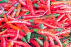 Canestro dei peperoncini rossi rossi lunghi Immagini Stock Libere da Diritti