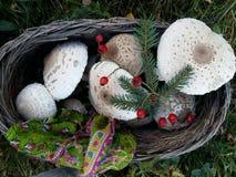 Canestro del fungo, decorato per la festa fotografie stock libere da diritti