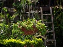 Canestro della pianta Fotografia Stock