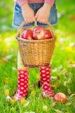 Canestro della tenuta del bambino con le mele Fotografia Stock