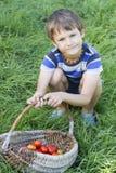 Canestro della tenuta del ragazzino con le verdure organiche sull'erba verde all'aperto Pomodori appena raccolti Fotografia Stock Libera da Diritti