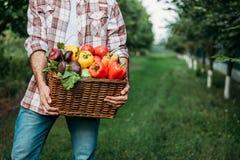 Canestro della tenuta dell'agricoltore con le verdure Immagini Stock Libere da Diritti