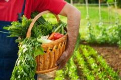 Canestro della tenuta dell'agricoltore in pieno delle verdure Immagine Stock Libera da Diritti