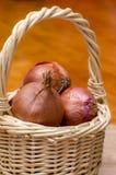 Canestro delle cipolle. Fotografia Stock