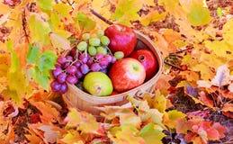 canestro delle mele e dell'uva sull'erba verde Fotografia Stock