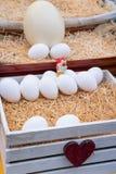 Canestro delle uova bianche fresche dell'azienda agricola Fotografia Stock