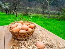 Canestro delle uova fresche, cotto di recente dalla gabbia di pollo, su un bordo di legno all'aperto nella campagna nel legno con immagine stock libera da diritti